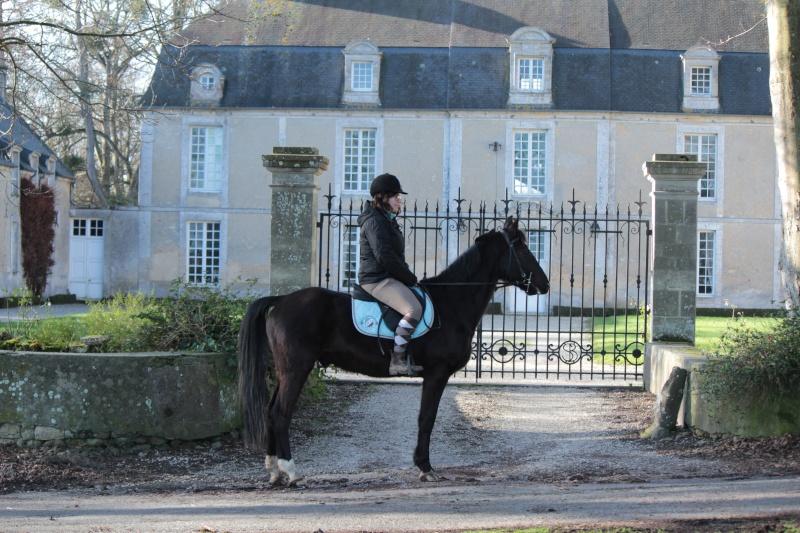 On juge vos chevaux au modèle Img_0010