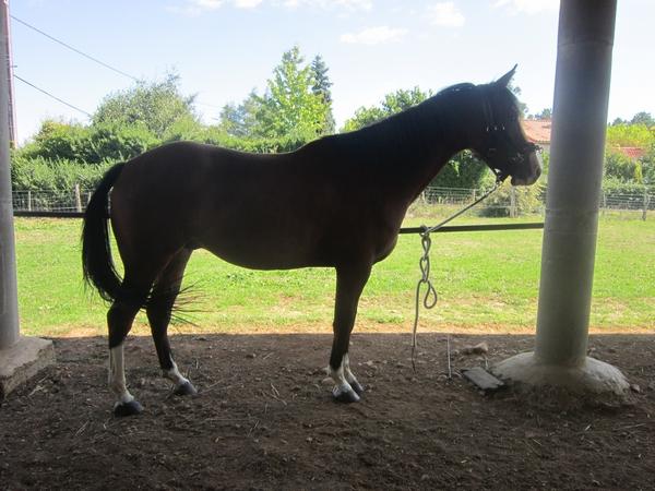 On juge vos chevaux au modèle - Page 2 Img_3410
