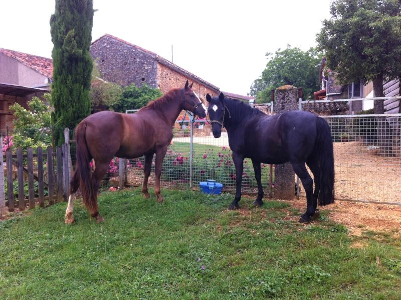 On juge vos chevaux au modèle Img_6910