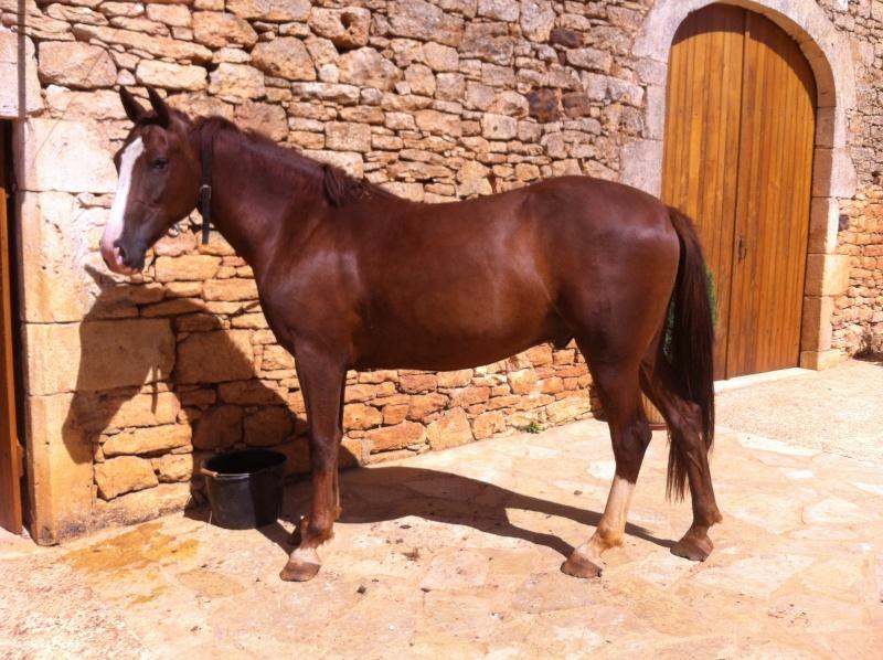 On juge vos chevaux au modèle Img_7510