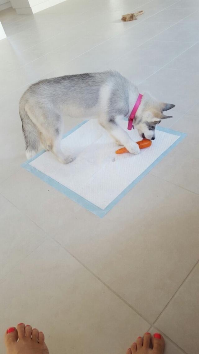 Kira's Scrapbook Img_7517