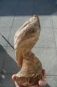 Premiere sculpture, avis bienvenus et quelques questions  Sam_2513