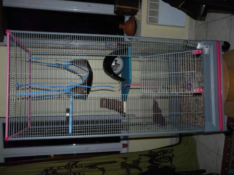 nouvelle cage de mes 2 louloutes! P1040210
