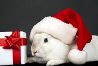 Père-Noël Surprise 2015 - Page 36 Lapin_10