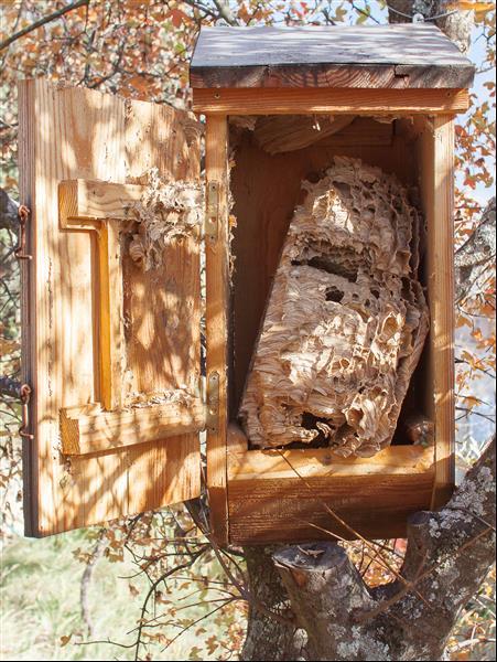 site occupé, en nichoir, et nid dans une cave Nichoi14