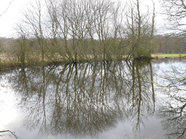 Bois l'eau… à Bois d'Ennebourg,…. et  à Bois  l'Evêque,   Bois_d12