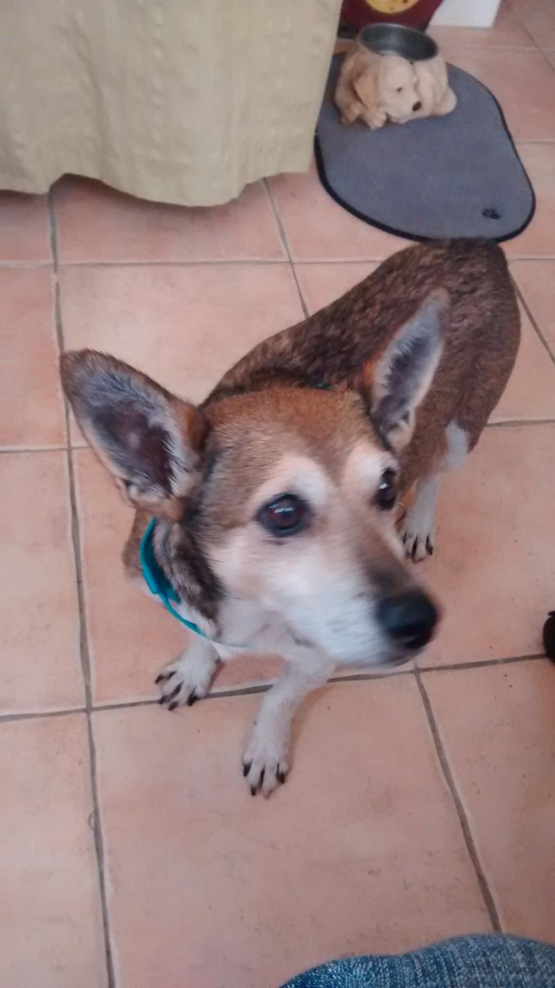 SIRO - Petit papi rescapé du refuge de Ceuta aimerait trouver sa famille 28111510