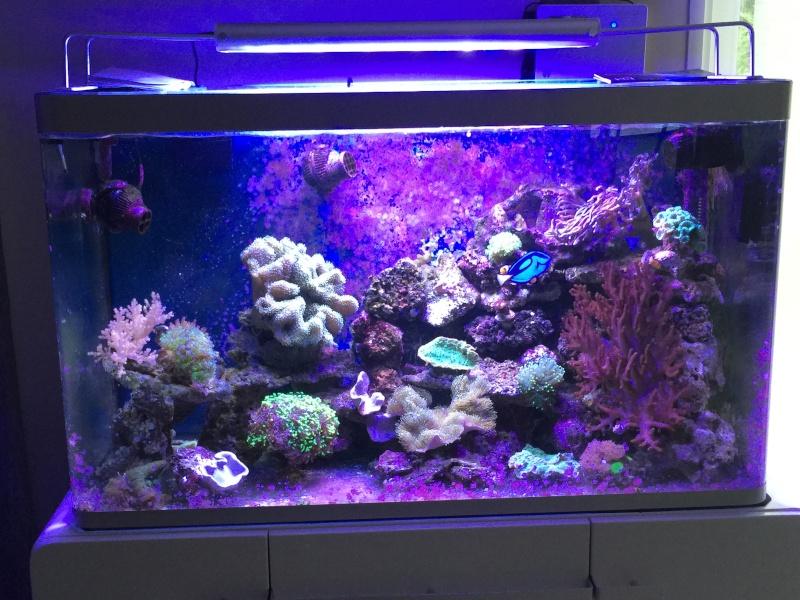 Présentation de mon bac Osaka 260  Image27