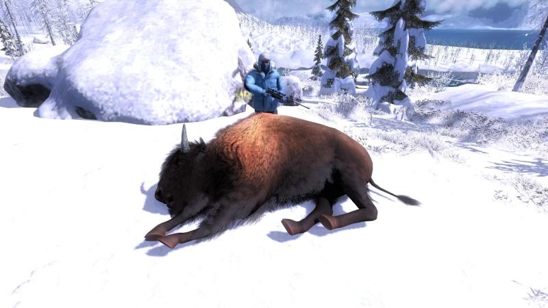 Bison Attack!! 2015-112