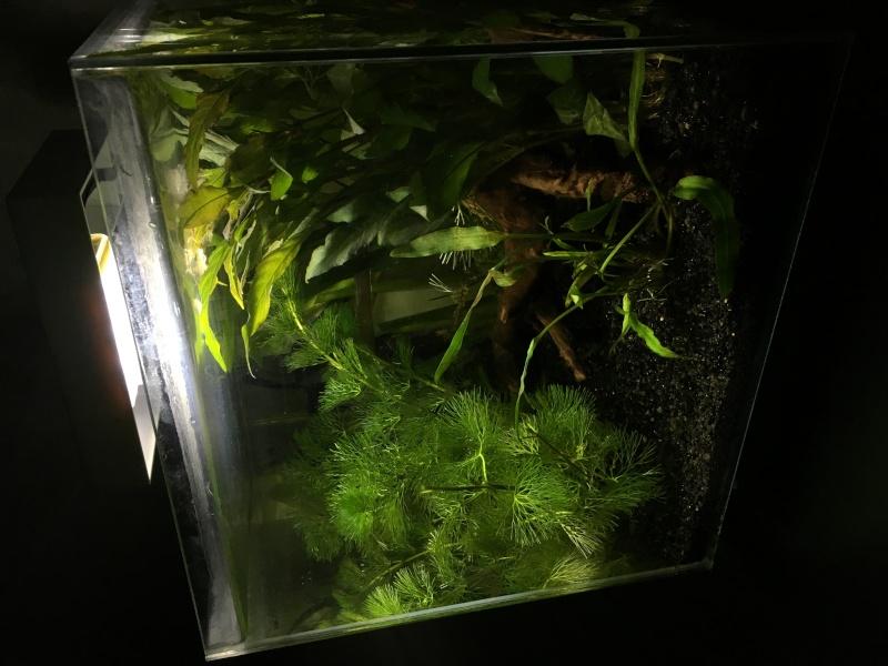 Aquarium pour mon futur poipoi Img_0510
