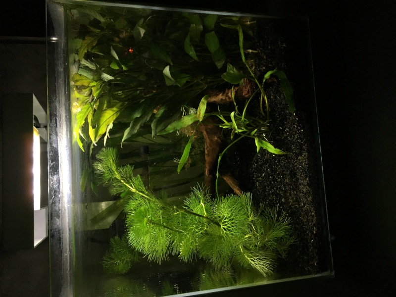 Aquarium pour mon futur poipoi Img_0511
