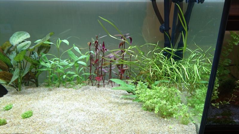 Lancement aquarium 240 litres population Amazonie  - Page 2 Dsc_0155
