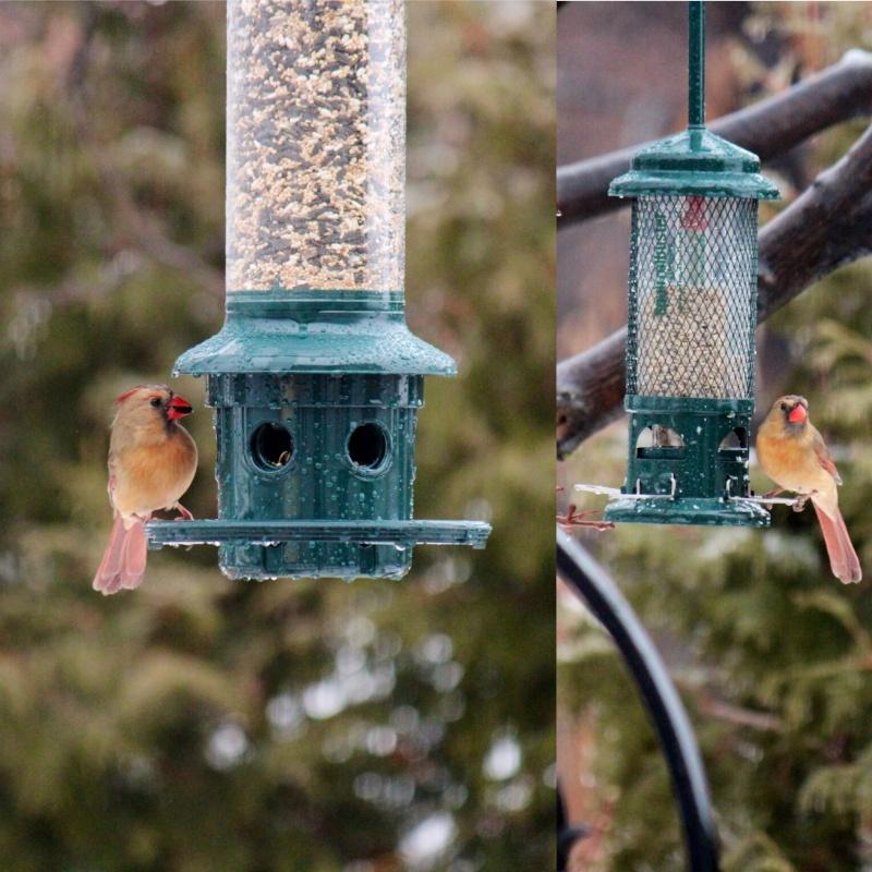 Cardinal Image154