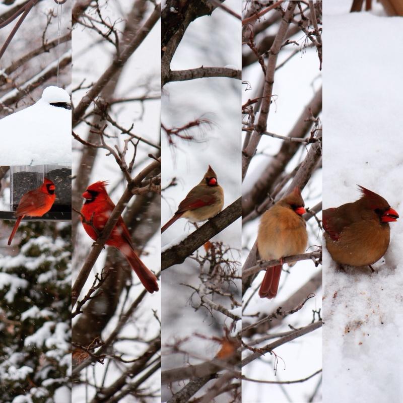 Cardinals Image74