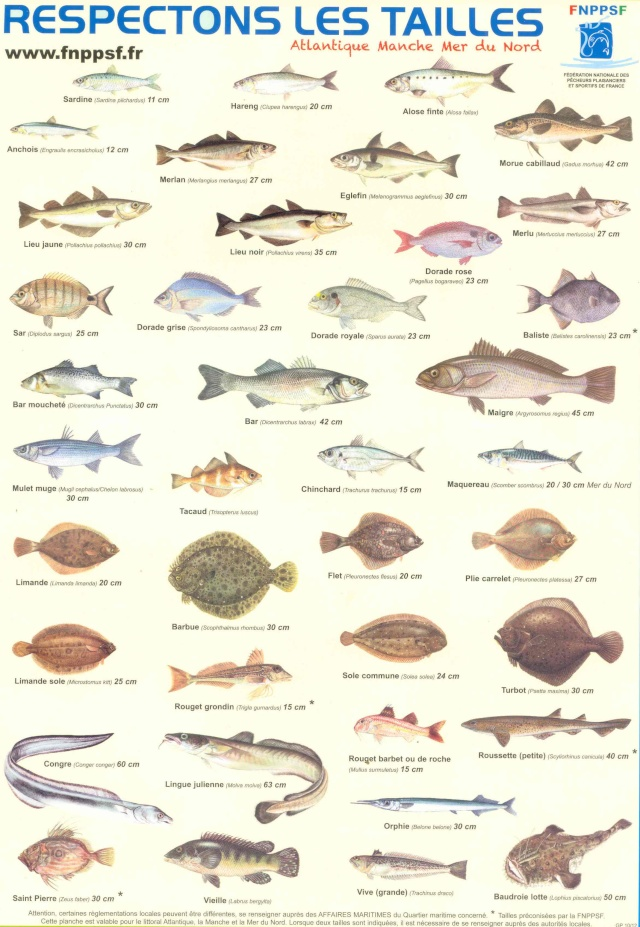 Tailles des poissons Taille21