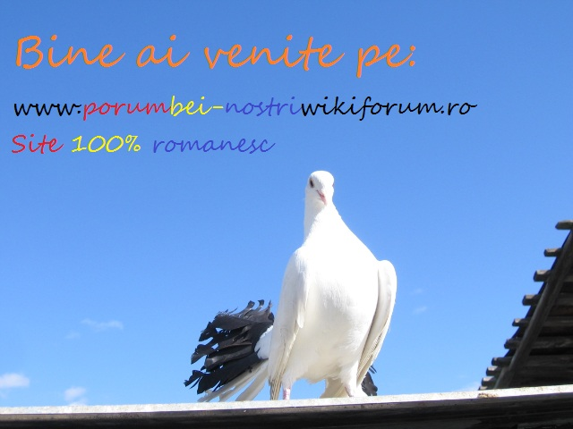 www.porumbei-nostri.wikiforum.ro