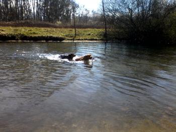 Donner envie de nager/d'aller à l'eau? - Page 3 Fantas15