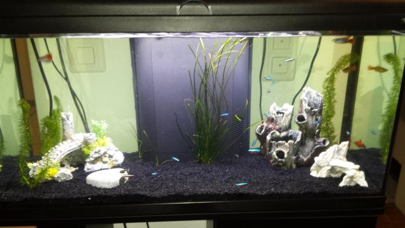 plantes dans un aqua 100% synthé ?  20151213