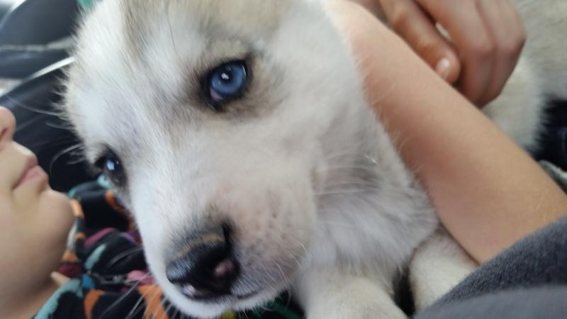 Meet Legion, a pup in StL  20151212