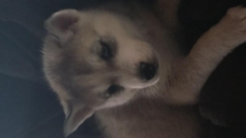 Meet Legion, a pup in StL  20151213