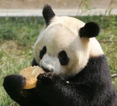 Because cats Panda11