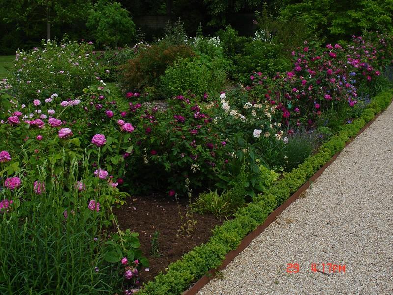 Visite de la roseraie de la Malmaison - Page 3 Dsc00749