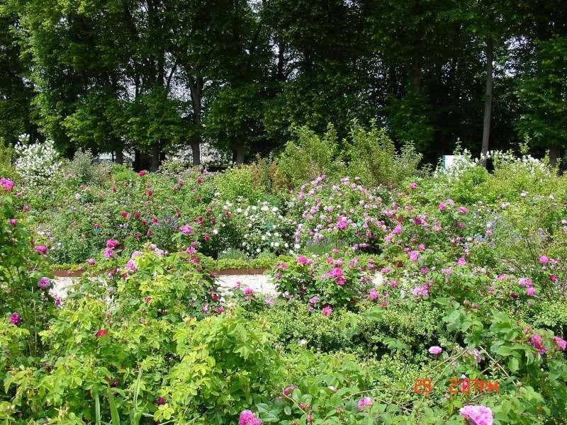 Visite de la roseraie de la Malmaison - Page 3 Dsc00750