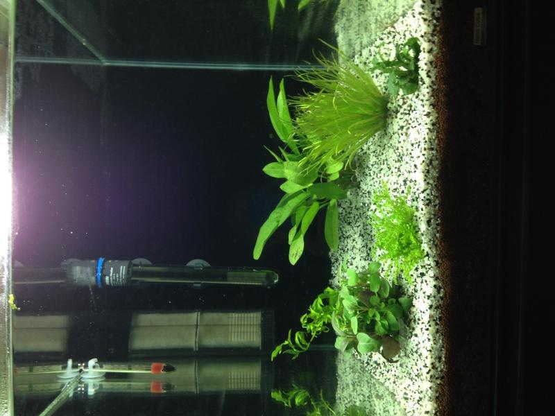 algues sur paroi en surface Img_0015