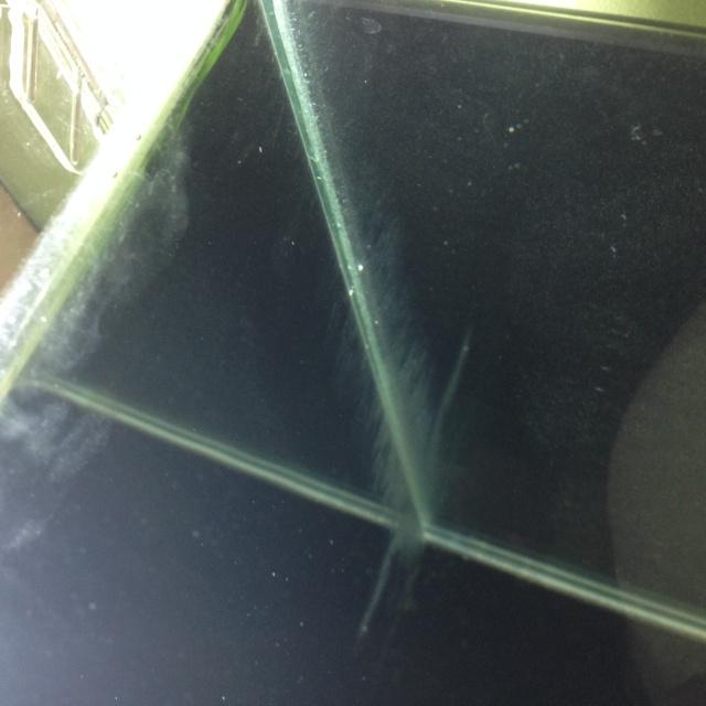 Algues brunes et algues filamenteuses Img_0110