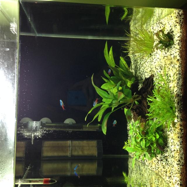 Algues brunes et algues filamenteuses Img_0111