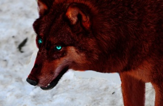 Willow The She-Wolf Zueric15