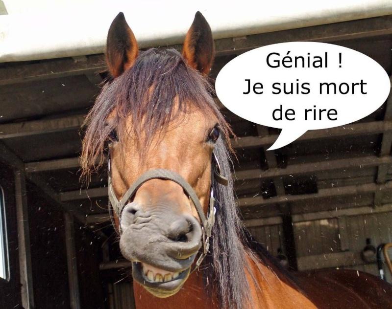 Bouchons de Semois pour pipe - Page 2 Cheval10