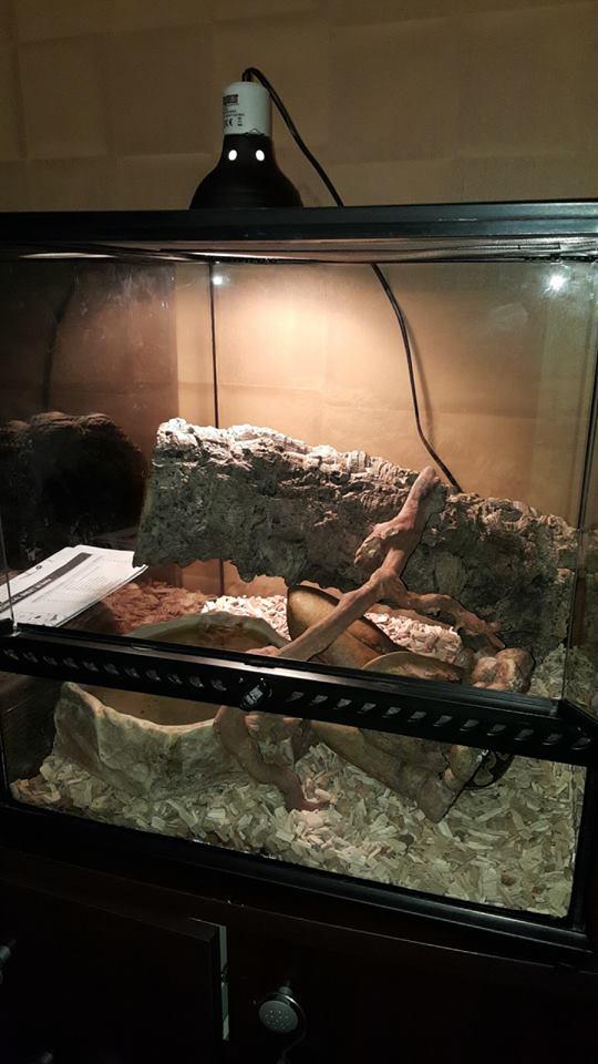 Chauffage terrarium Python regius Terra_15