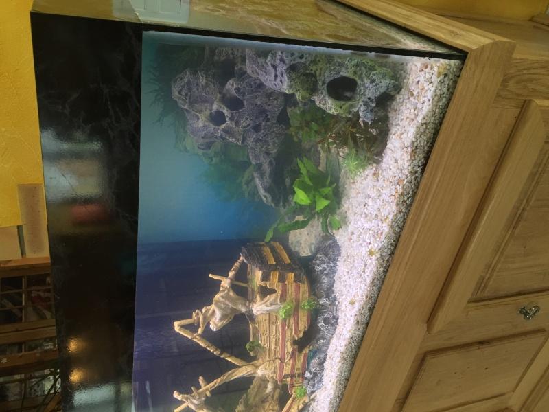 Aquarium 350L démarrage problème cycle d'azote Img_0414