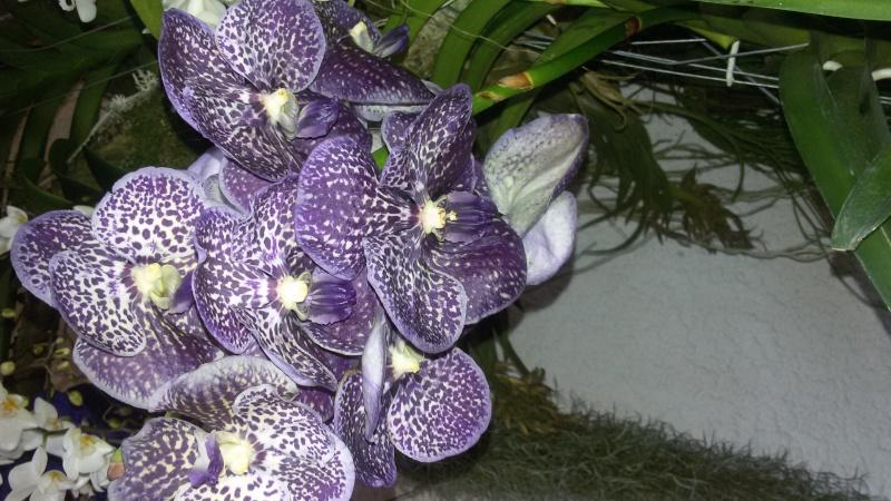 9. Orchideenausstellung Bingen am Rhein 20150315