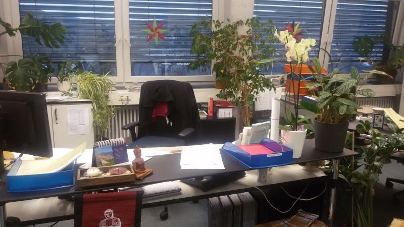 Ein Sekretariat voller Orchideen (ich hoffe, das ist hier der richtige Platz dafür) Seki110