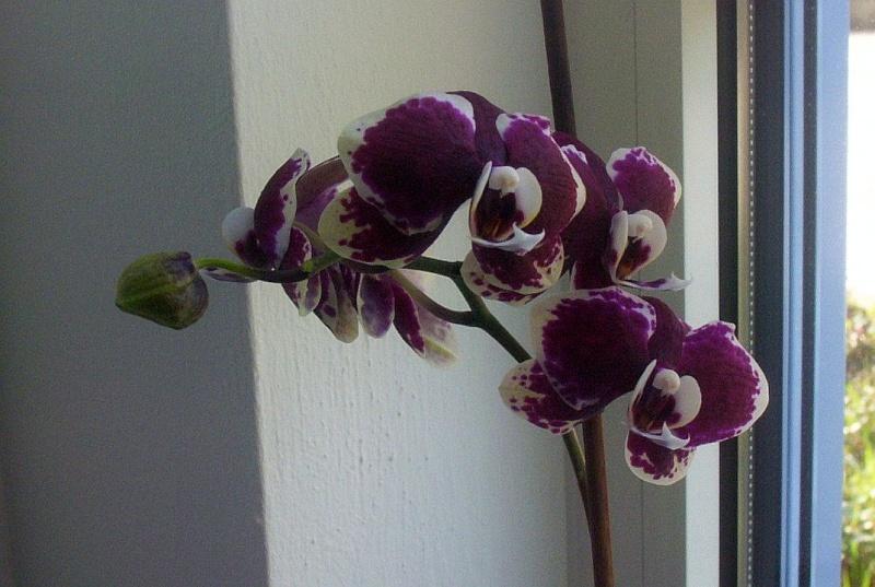 Ein Sekretariat voller Orchideen (ich hoffe, das ist hier der richtige Platz dafür) Seki410