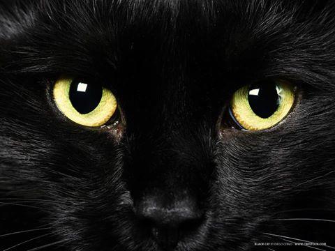 Форум эзотерического салона Чёрный кот