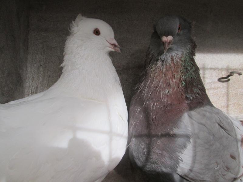 élevage à LEPORCQ Rémi  Couple16