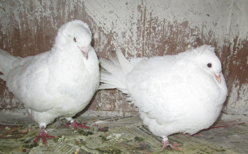 élevage à LEPORCQ Rémi  Img_2610