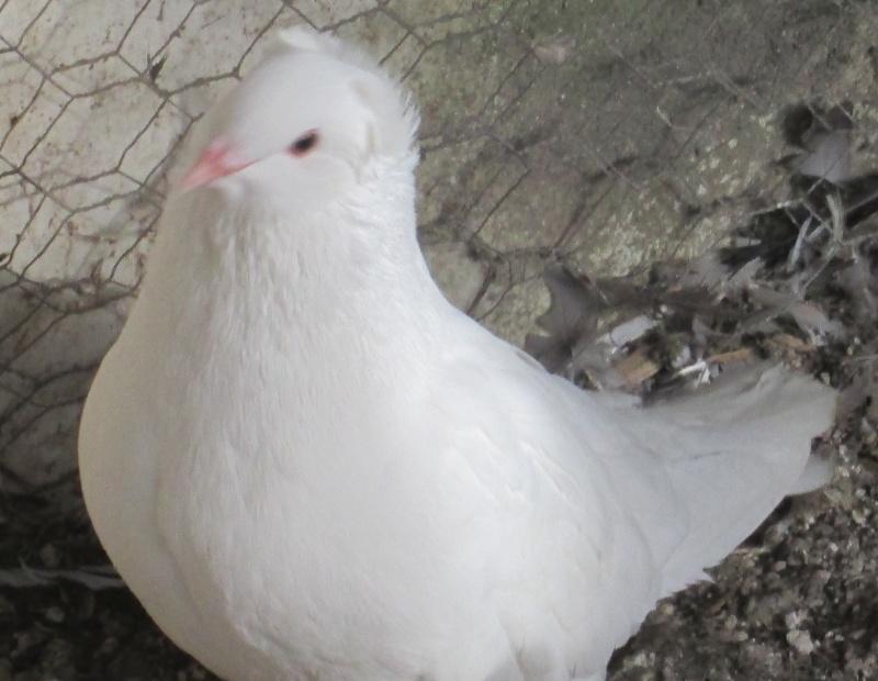 élevage à LEPORCQ Rémi  Sans_t31
