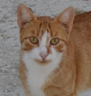 KITTY - En FA en Suisse Kitty10