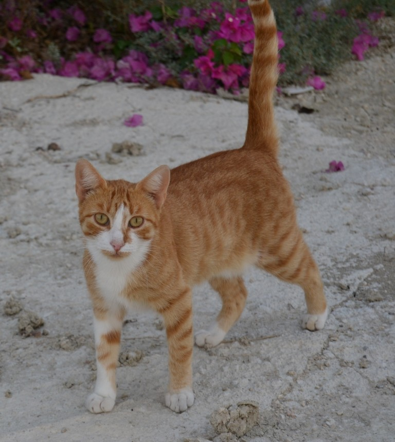 KITTY - En FA en Suisse Kitty_10