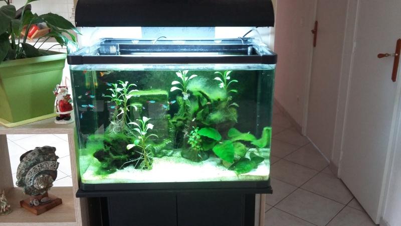 algues filandreuse aquarium eau douce 20151215