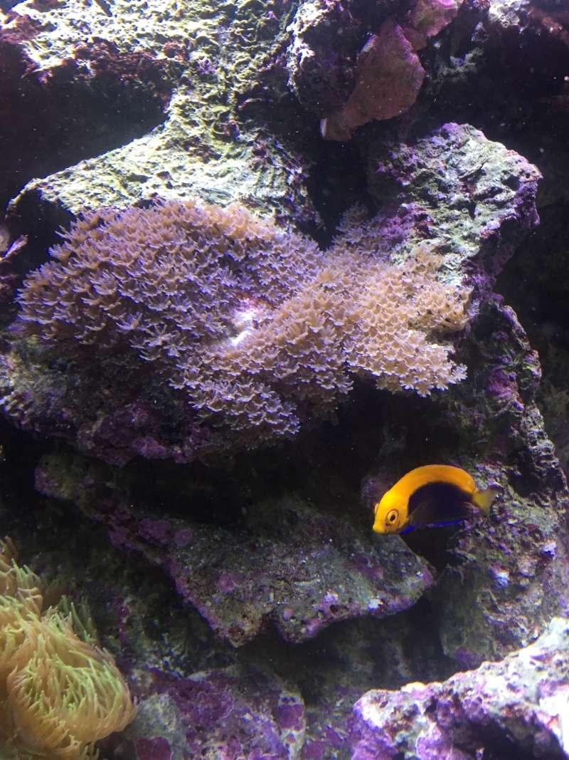 identification corail mou 2016-010