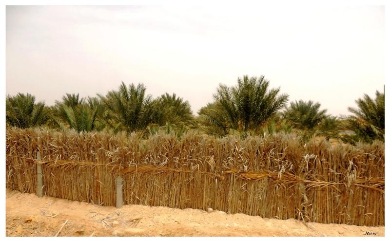 Le désert insolite. Dscn2014