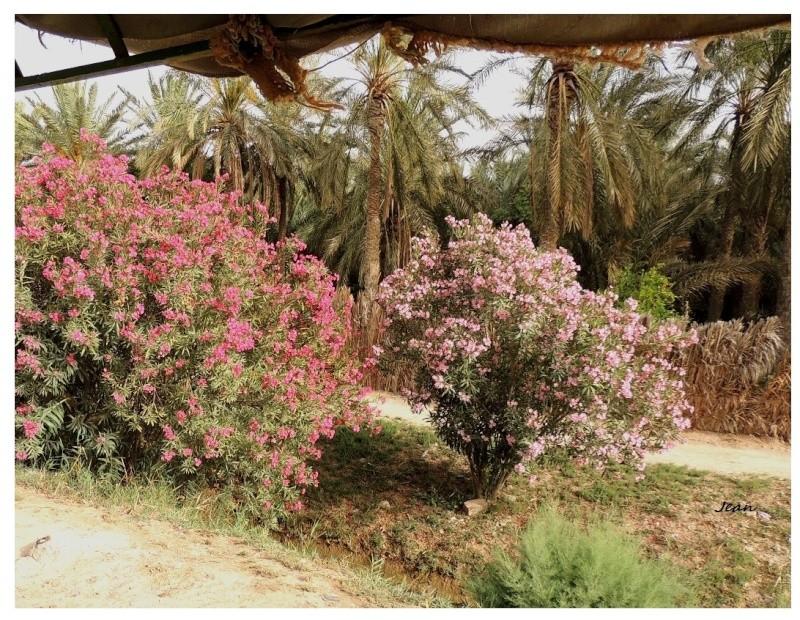 Le désert insolite. Dscn2121