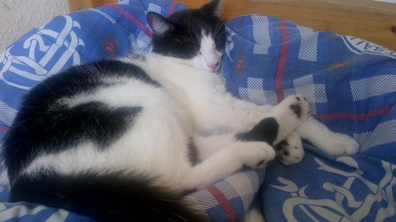here is my :cat:  Cat12