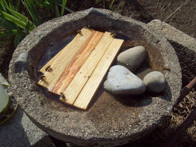 Ruche écologique et barrettes: Lutte VARROAS 00511
