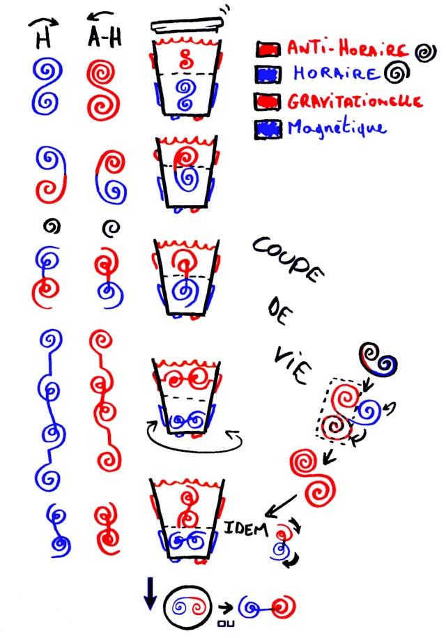Coupe de vie, dessin anti-horaire en haut Couped11